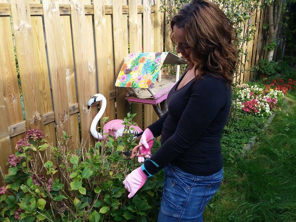 herfsttuin hortensia knippen