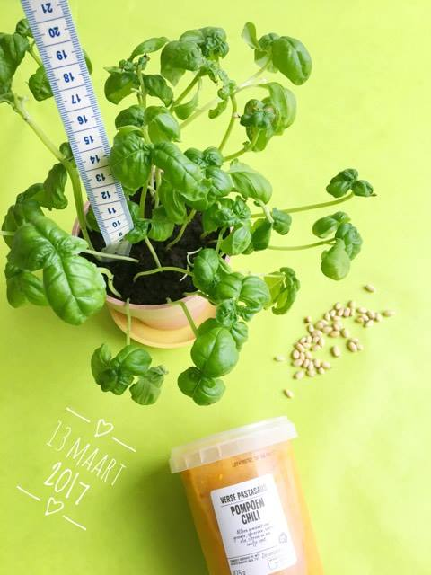 basilicumplant kweken