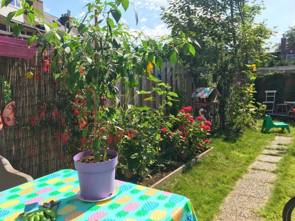 peperplant buiten