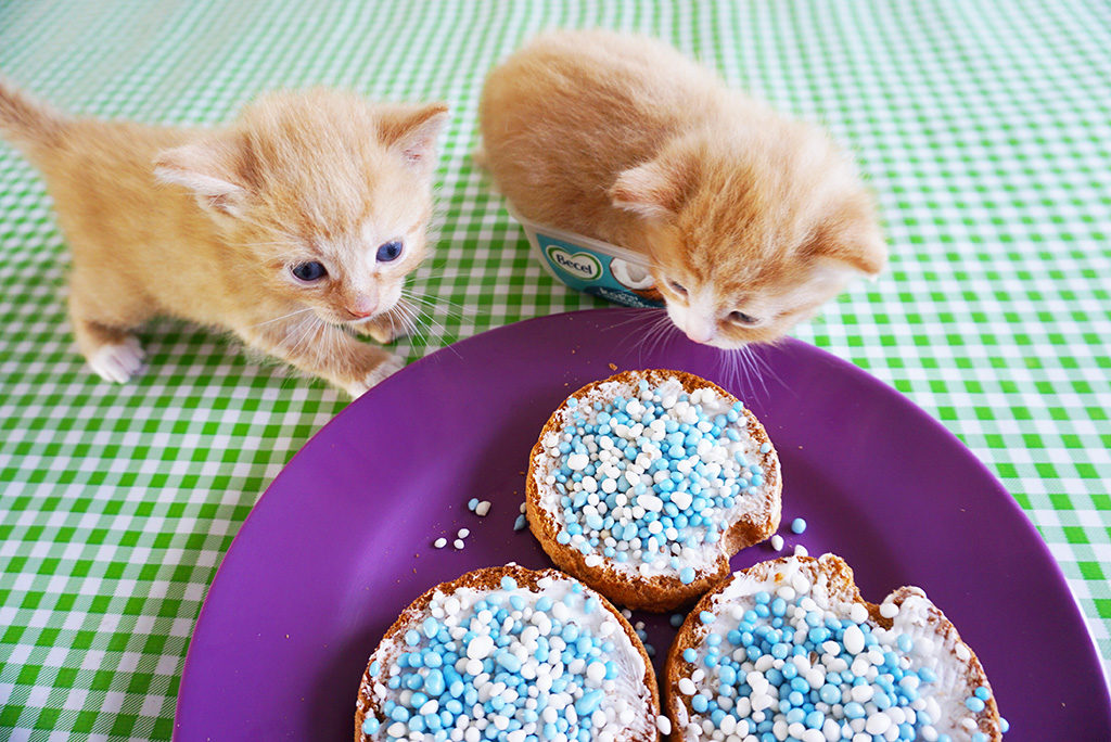 gender reveal kittens