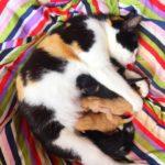 Krolse Tijden, Kittige Tijden #4 De kittens zijn geboren!!!